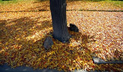 Fall Colors Salinas - 111413