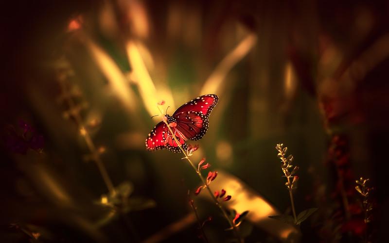 The Magic of Light-269.jpg