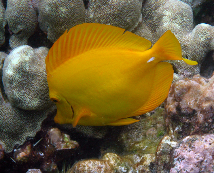 475- 20080416- Hawaii 20-Snorkelling IMG_0677.jpg
