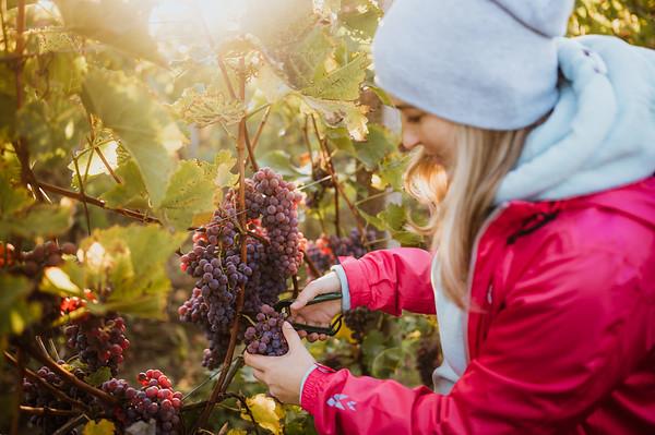 Vinarstvi Jastik :: vinobrani 2019