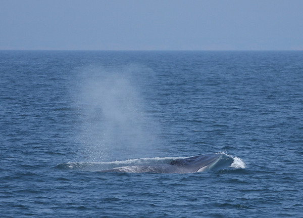 2009 - Whale Watching