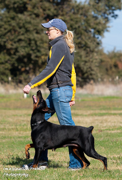 Dogs-Trials/Training/Shows/Seminars/Individuals