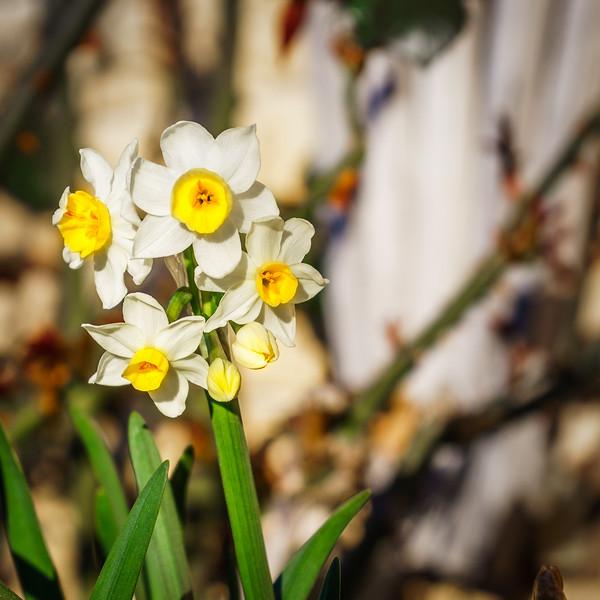 Garden220815-006.jpg