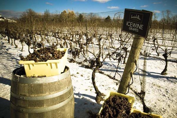 inniskillin ice wine.jpg