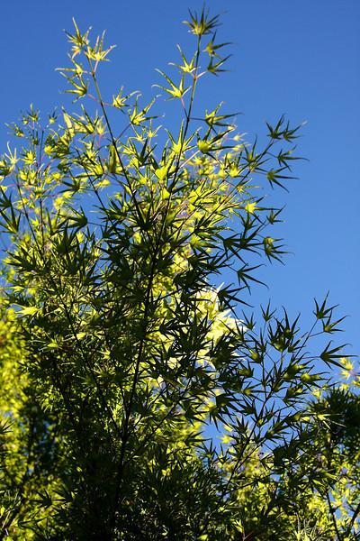 Portland Japanese Garden 6-3-11  1780.jpg