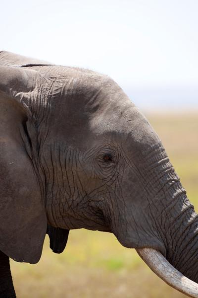 Elephant _MG_0312.jpg
