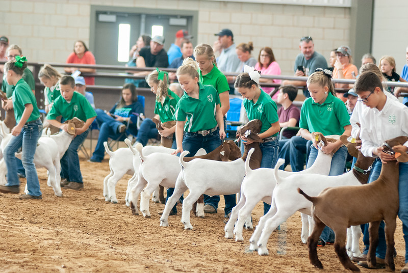 Tulsa_2019_goat_wether_showmanship-4.jpg