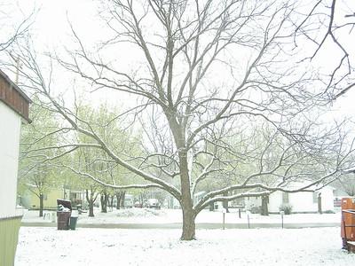 2006 3-23 snow
