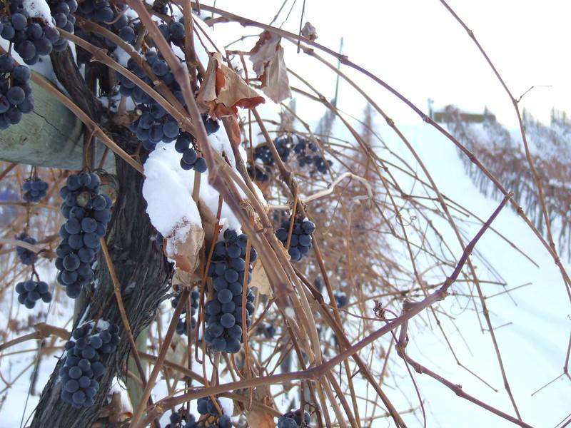 Sandhill Wines (3).JPG