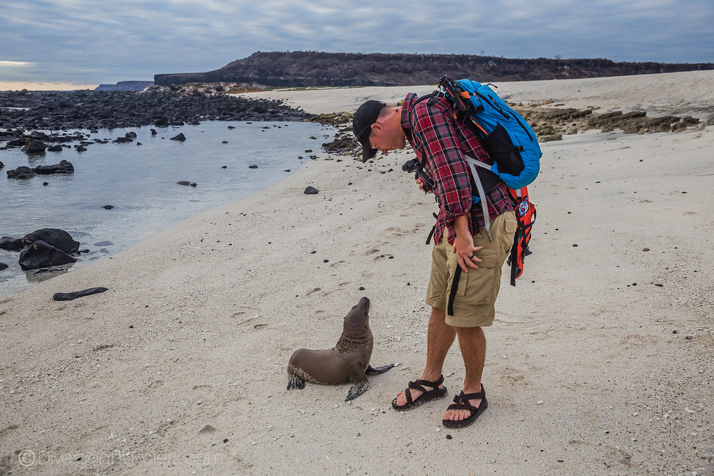 Sea lion pup with David Stock in the Galapagos Islands