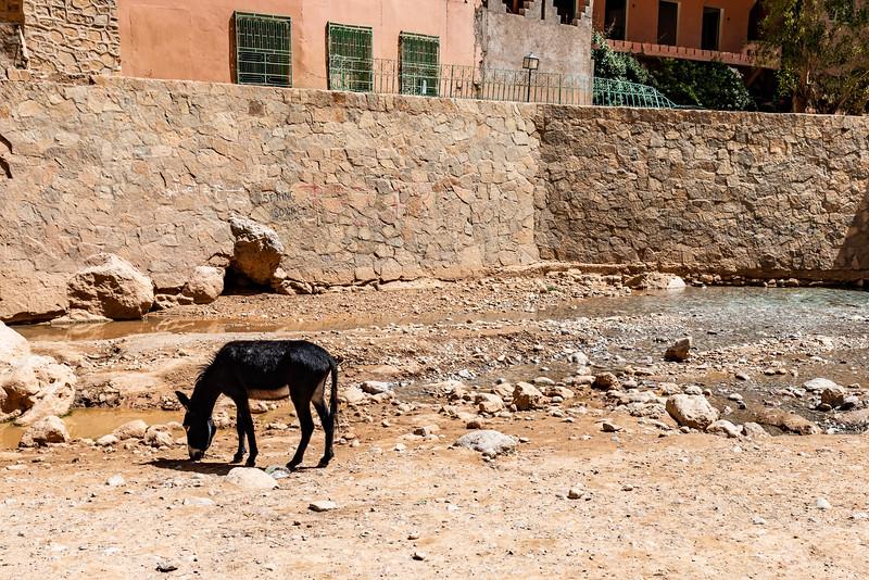 Marruecos-_MM11001.jpg