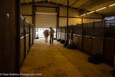 Baldus Horsemanship / January 2021