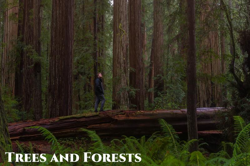 treesandforests.jpg