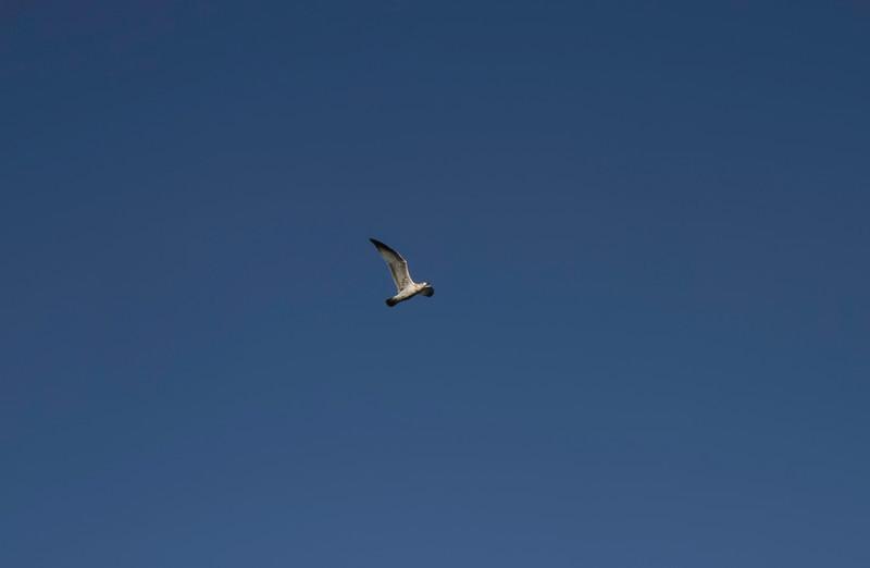 01_Flathead Lake_Montana-4.jpg