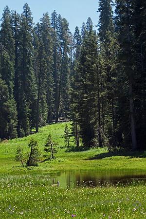 Yosemite and Eastern Sierra