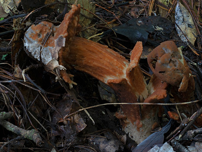 Fungi infections