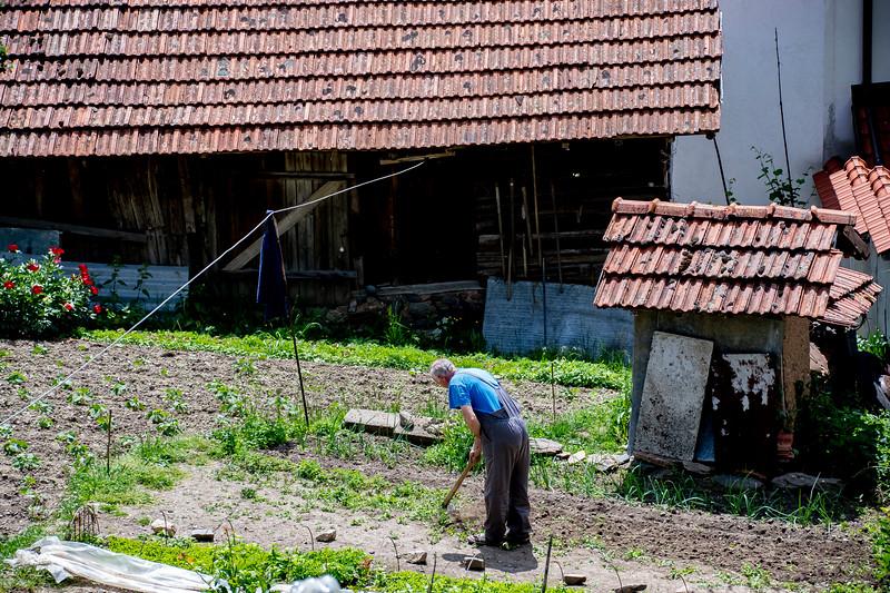 זקן עובד בגינה.jpg
