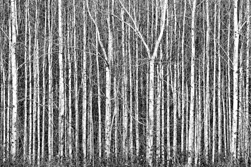 Wall of Trees