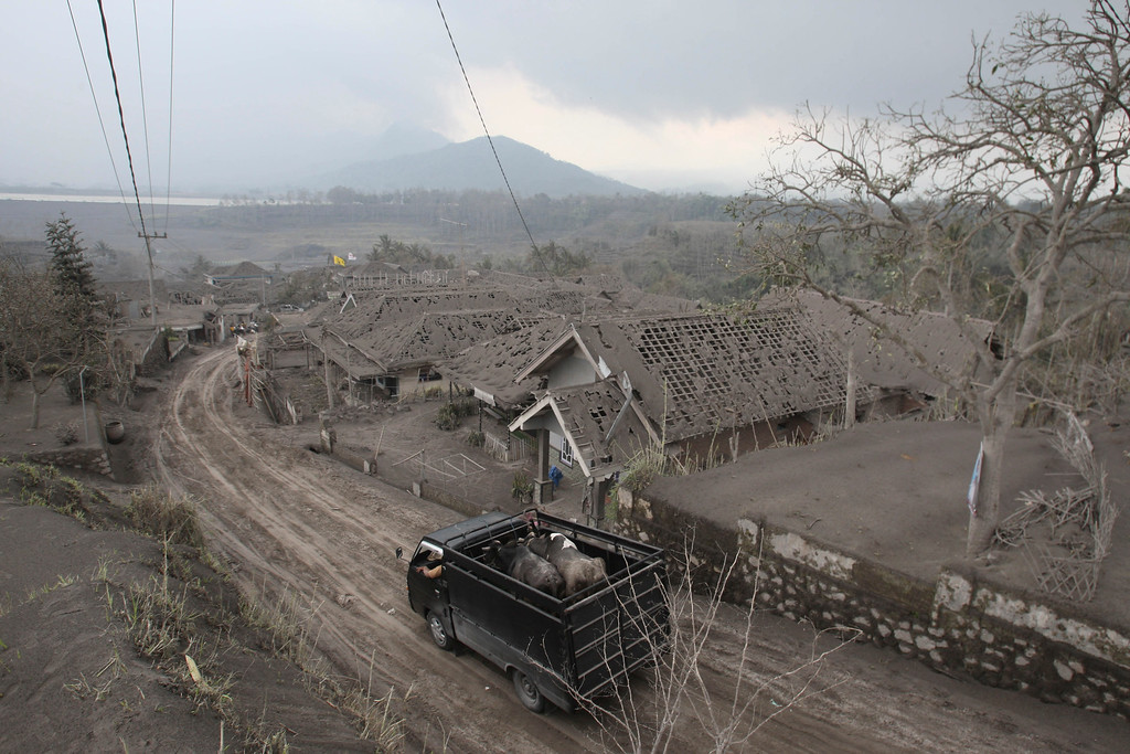 . A truck carries animals for evacuation past houses covered with ash following an eruption of Mount Kelud, in Malang, East Java, Indonesia, Sunday, Feb. 16, 2014. (AP Photo/Trisnadi)
