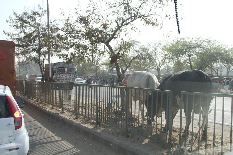 India_2012Feb-5509.jpg