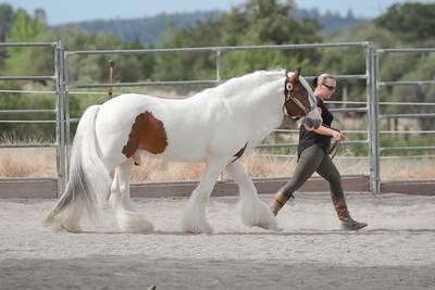Starfire Horses