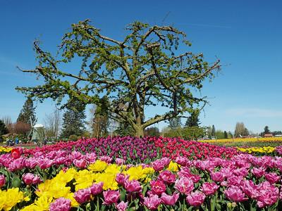Flowers in Skagit County