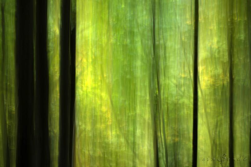 Espíritus del bosque. Ordesa VI