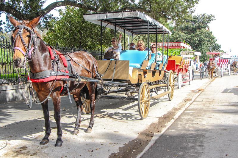 Mule traffic...