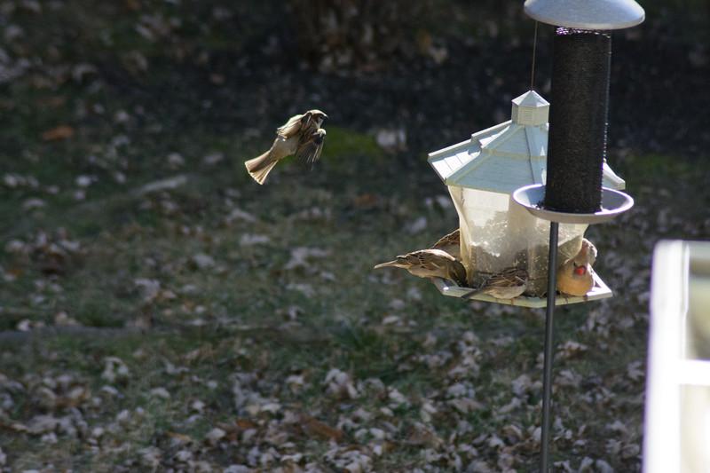 Birds flying-020