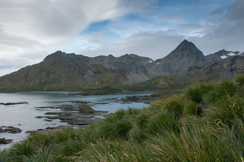 Scenery in Cooper Bay, South Georgia Island