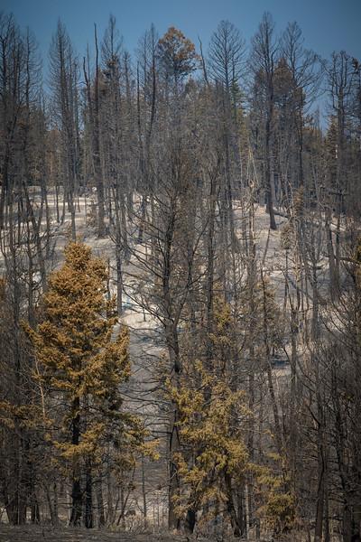 08122018 DOLLAR RIDGE FIRE_FIRE OPS-2.jpg