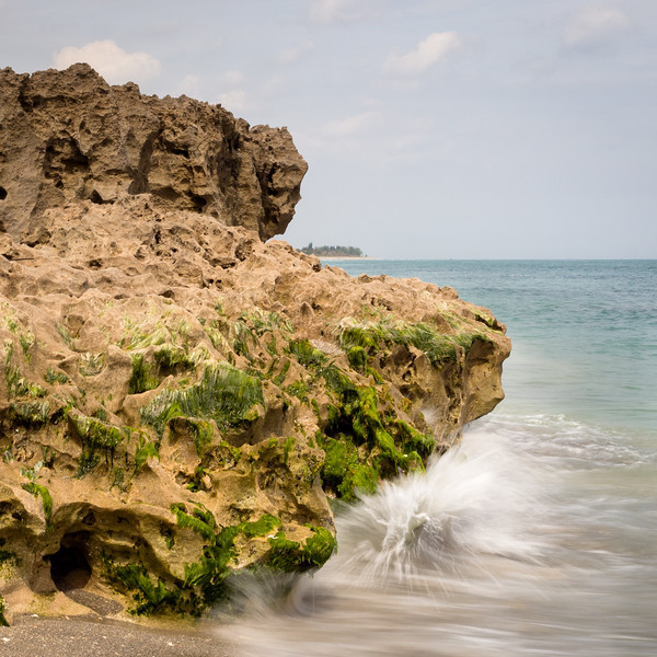 Coquina Rocks, Blowing Rocks Preserve, Hobe Sound, Florida  (39244-39246)
