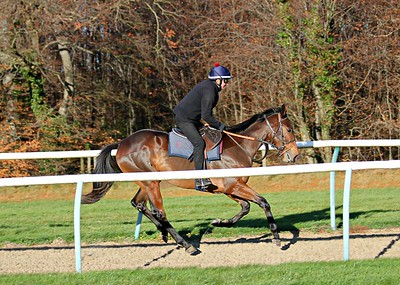 Cheveley Park Stud