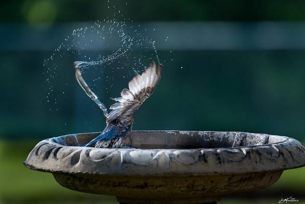 Spring/Summer Birds