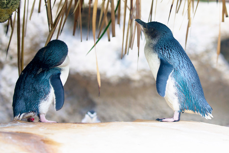 Two Little Penguins