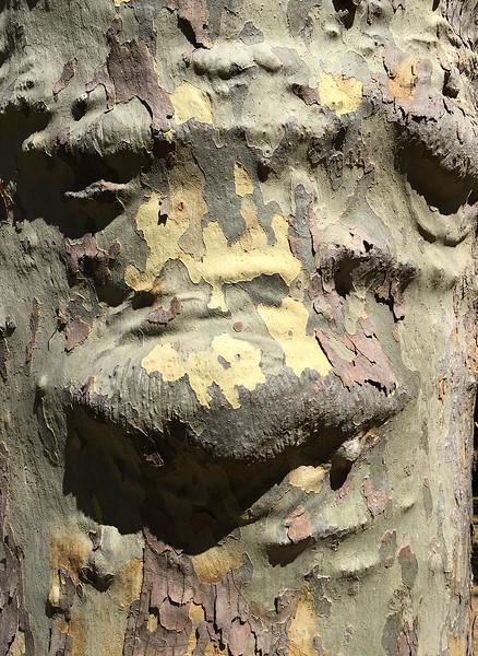 wood face.jpg