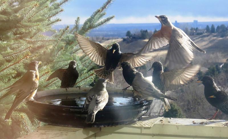 birds (183).jpg