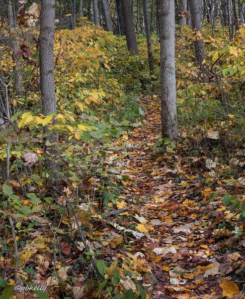 trails 102216-2.jpg