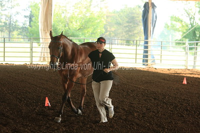 R13 Sport Horse In Hand