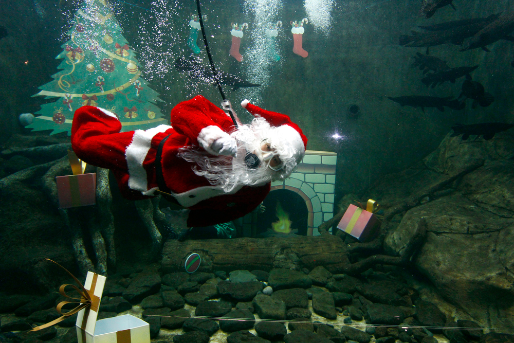 Description of . A man dressed as Santa Claus scuba dives in a pool in Guadalajara Zoo Aquarium in Guadalajara, Mexico on December 16, 2012. HECTOR GUERRERO/AFP/Getty Images