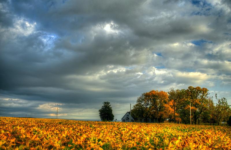 Autumn 2014 - Soy beans and god(p).jpg