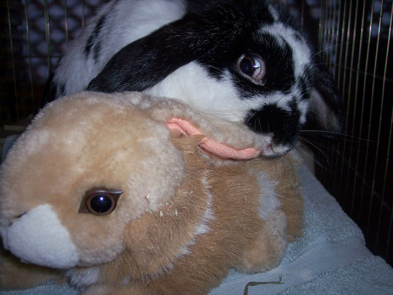 """JoJo, one of the bunnies, giving the eye to the stuffed bunny. """"You lookin' at me?"""""""