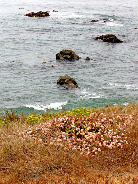 12-70 bluff,flowers,rocks.JPG
