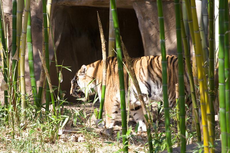 Zoo_Trip_51.jpg