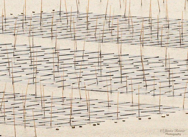 Seaweed field