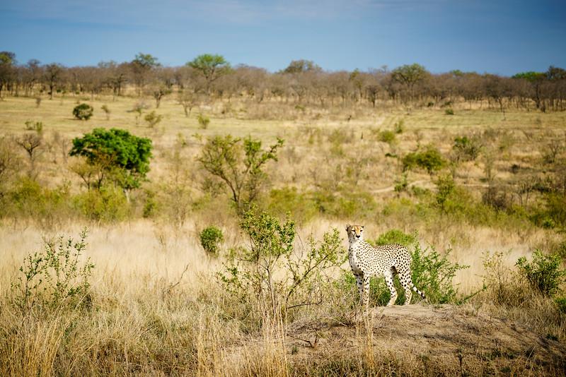 LeopardHills-20171022-0261.jpg