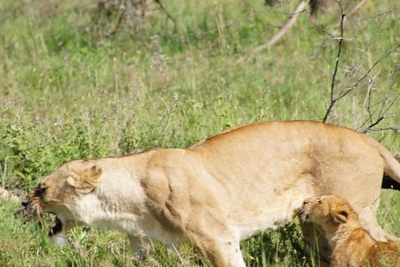 1494239978African-Safari-69.jpg