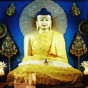 Buddha Trip