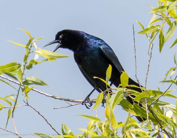 day 4 So FL Birding-65