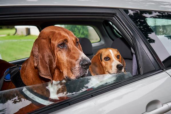Knox County Humane Society Car Ride 1 September 12, 2020